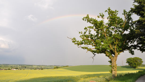 A rainbow over a lightening struck tree between Great Henny and Lamarsh, Stour Valley